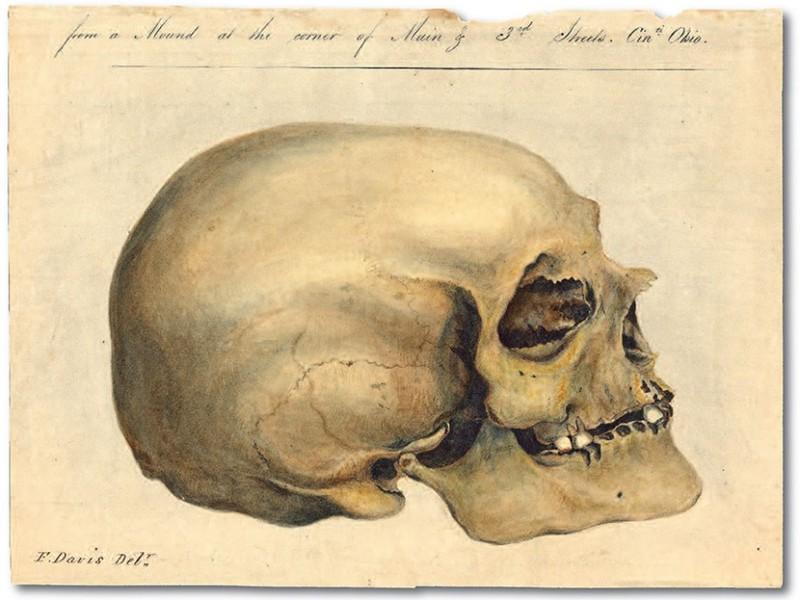 Crania Americana Morton